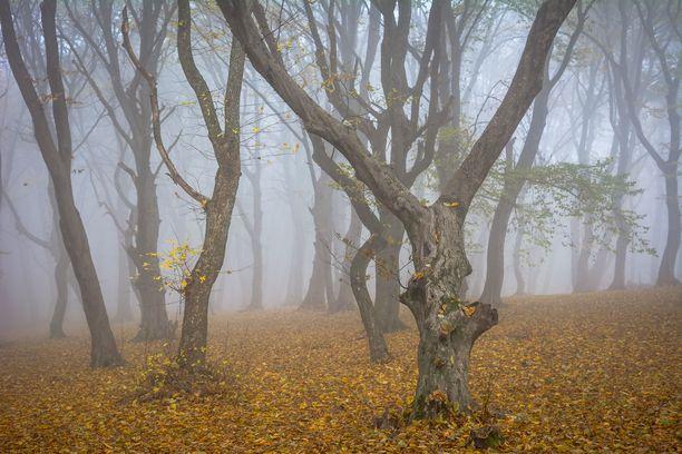 Hoia Braciussa kasvaa erikoisen muotoisia puita.