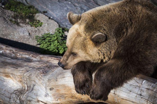 Makoisia talviunia Korkeasaaren karhukaksikolle!