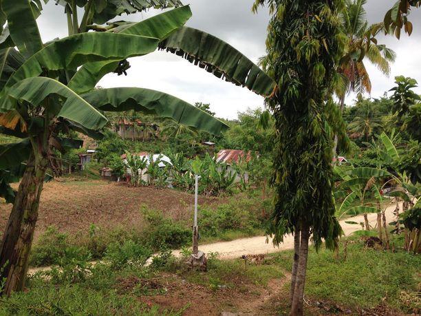 Banaanipuita Rosan kotikylässä.