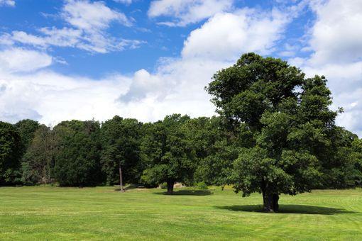 Hagan puisto on kesällä vehreimmillään.