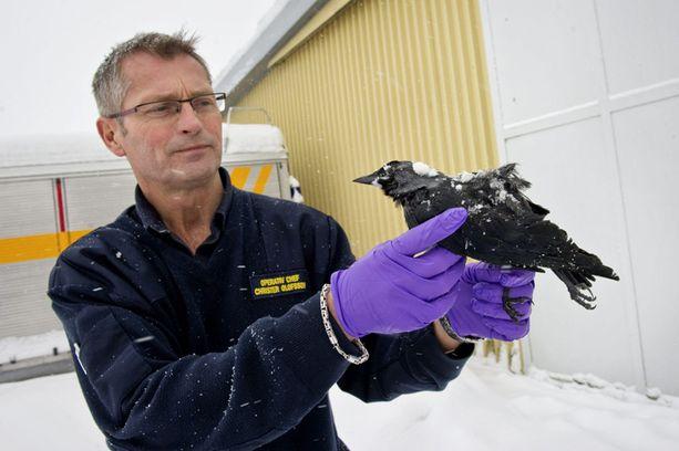 Pelastustyöntekijä Christer Olsson tutki kuollutta lintua Falkopingissa Ruotsissa keskiviikkona.