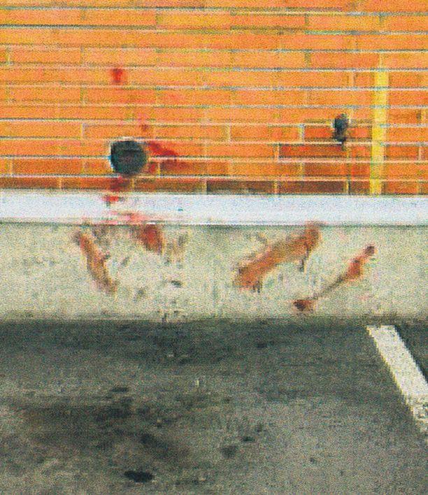 Jäljet kertovat Puukottaja veti ruumiskääröä aina kolmannesta kerroksesta alas parkkipaikalle.