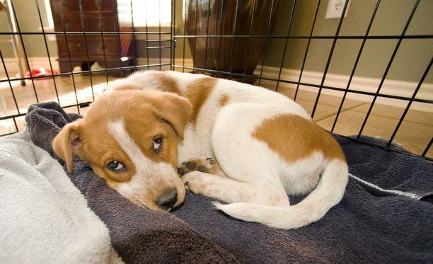 Eläinsuojeluneuvoja neuvoo miettimään, miksi koira ylipäänsä toimii niin kuin toimii sen sijaan, että ongelmainen koira suljettaisiin häkkiin.