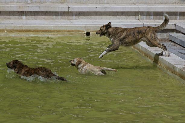 Koirat vilvoittelivat Madridissa.