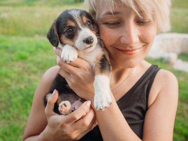 Koiranpennut ovat söpöjä ja valloittavia, mutta hankintapäätöstä ei silti pidä tehdä ensivaikutelman perusteella.