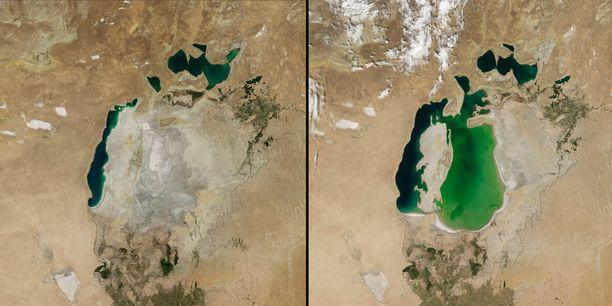 Vasemmalla näkyy Araljärvi vuonan 2014, oikealla vuoden 2000 tilanne. Kuviin on piirretty mustalla järven 1960-luvun ääriviivat.