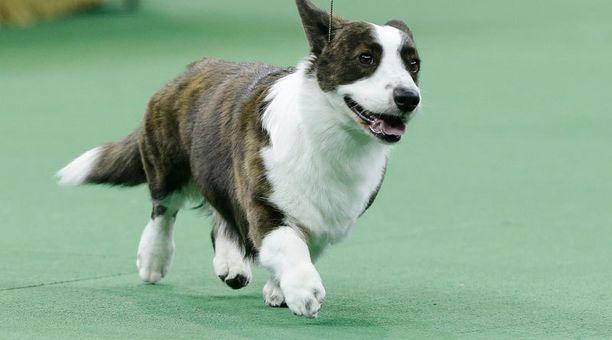 Koira hämmensi futismatsissa. Kuvan eläin ei liity tapaukseen.