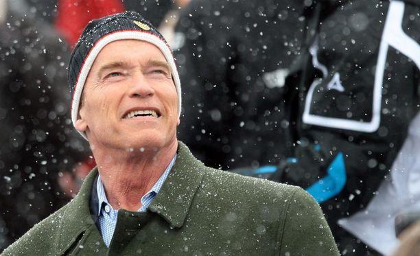 Arnold Schwarzenegger vierailee usein Kitzbühelissä alppihiihdon kisoissa.