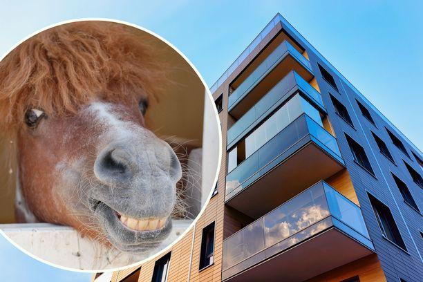 Poni vietiin kerrostalohuoneistoon, eikä se suostunut enää omin jaloin kävelemään portaita alas.