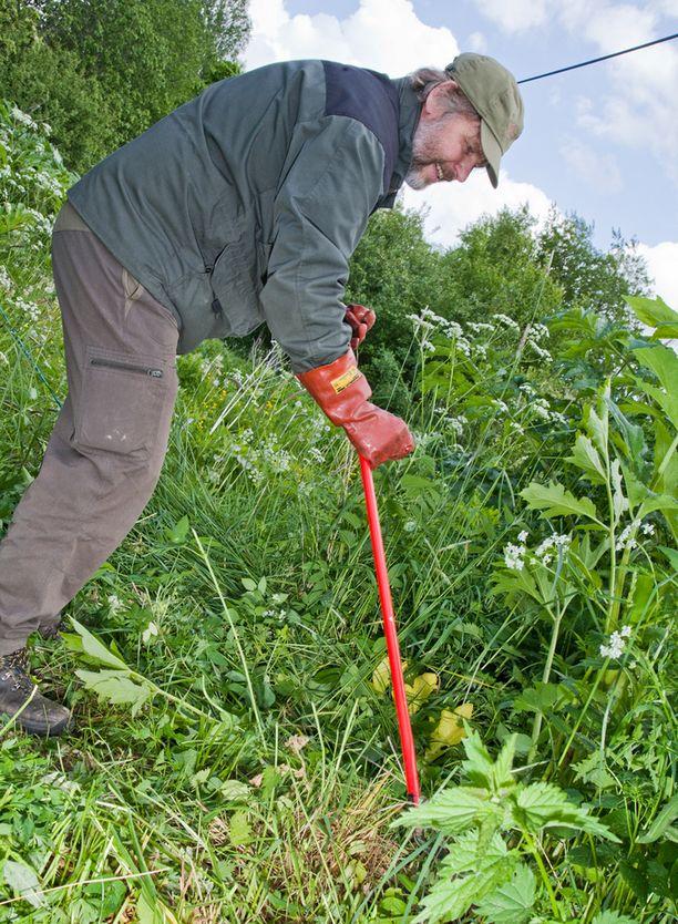 Jättputken hävityksessä tarvitaan suojavarusteita, sillä kasvista voi saada palovammaa muistuttavia oireita.