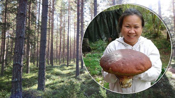 Lengrak Samphatsin löytämä sieni on suunnaton.