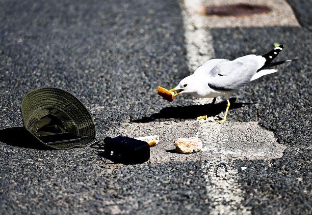 Hengestään taisteleva lokki aiheutti pulmallisen hätäkeskustehtävän Pirkanmaalla. Kuvituskuva.