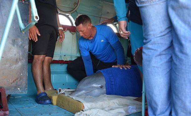 Delfiinit lennätettiin helikopterilla Kuuban pohjoisrannikolta etelärannikolle.