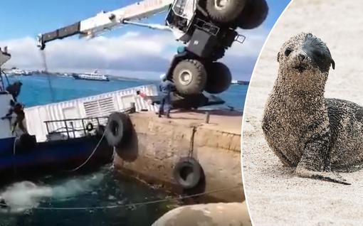 Videolle tallentunut karu kömmähdys johti mittaviin pelastustoimiin Galapagossaarten erityisherkässä ympäristössä