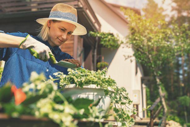 Kesällä pihalla ja puutarhassa puuhastelu on rentouttavaa. Hyviin työasentoihin kannattaa kiinnittää huomiota.