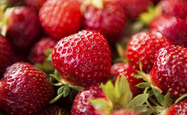 Yhä useampi kasvattaa mansikoita tunnelissa, kertoo Savon Sanomat.