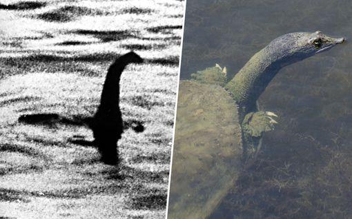 """Eläkkeellä oleva professori """"ratkaisi"""" Loch Nessin hirviön arvoituksen: se on kilpikonna"""