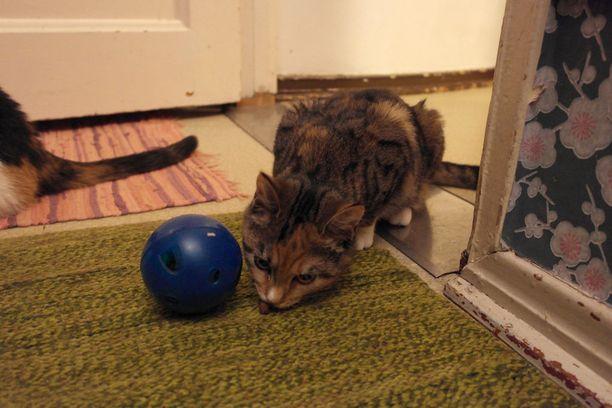 Aktivointilelut ovat näppärä keino antaa kissalle tekemistä. Niitä on helppo tehdä myös itse.