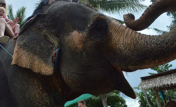 Kuvassa perhe ratsastaa norsulla Thaimaassa Koh Phanganissa. Kuvituskuva.