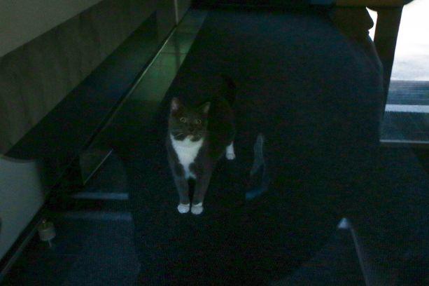 Kissa tuli pois päästyään tutustumaan pelastajiinsa.