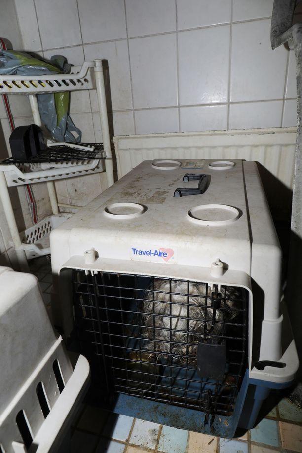 Poliisi julkaisi tämän kuvan Itä-Helsingissä asuneen naisen kotoa. Sieltä löytyi 26 erittäin huonokuntoista koiraa ahtaista ja pimeistä tiloista.