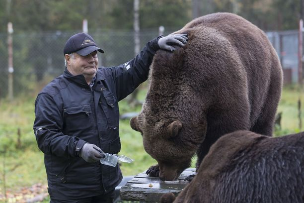Omenat maistuvat karhuille iltapalaksi, kertoo Sulo Karjalainen.