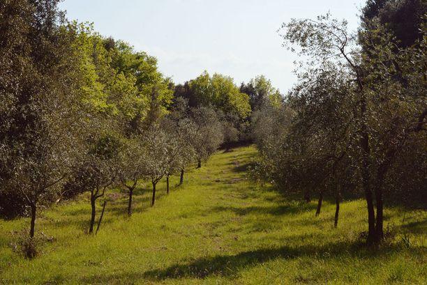 Tiluksilta löytyy myös oliivilehto.