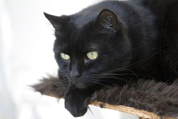 Sairaus voitti Miska-kissan.