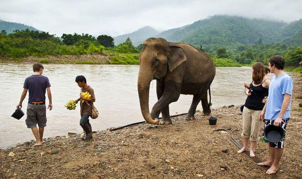 Elephant Nature Parkia pidetään yhtenä Aasian parhaista norsujen turvapaikoista. Kohde sijaitsee Pohjois-Thaimaassa, lähellä Chiang Maita.