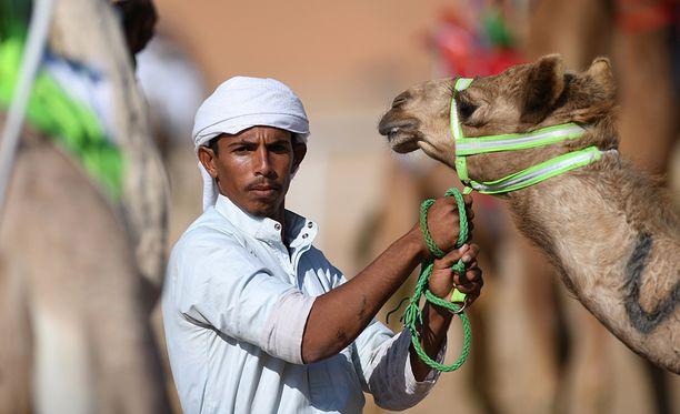 Tänä vuonna kamelifestivaalit siirrettiin syrjäisestä paikasta keskeltä autiomaata pääkaupungin Riadin pohjoispuolelle.