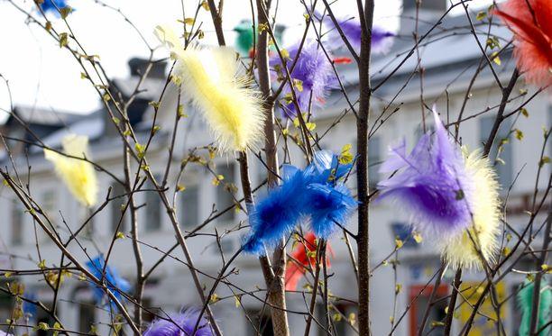 Vihertäviä oksia voi käyttää esimerkiksi pääsiäisaskaretelussa.