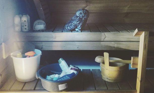 Pääsiäisen viettäjät olivat ihmeissään, kun saunan lauteilla istui helmipöllö.