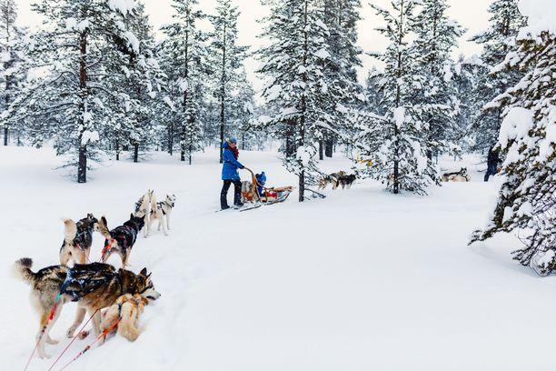 Tätä Suomen Lapilta halutaan: lumisia maisemia ja koiravaljakkoajelua.