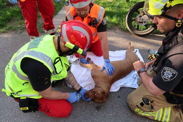 Koiralle annettu happi pelasti savumyrkytykseltä.