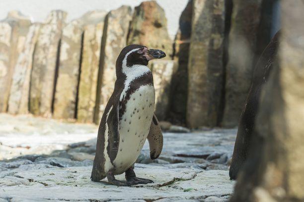 Eläintarhojen somekanavat sisältävät aivan ihania kuvia ja videoita.
