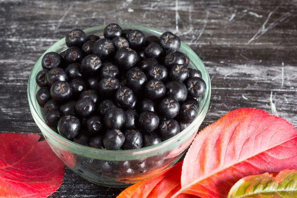 Tutkimusten mukaan marja-aroniat sisältävät poikkeuksellisen paljon antioksidanttisia polyfenoleja.