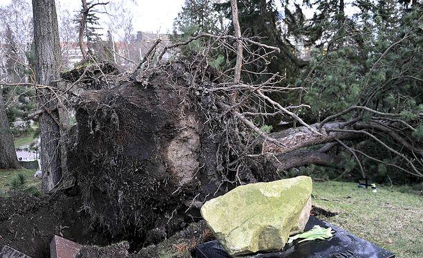 Vuoden 2011 tapaninpäivänä koetun myrskyn jälkeen säädettiin sähkömarkkinalaki, jonka mukaan myrskyn tai lumikuorman aiheuttama keskeytys saa kestää maksimissaan kuusi tuntia asemakaava-alueella ja 36 tuntia asemakaava-alueen ulkopuolella. Kuva Hietaniemen hautausmaalta.