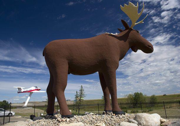 Mac the Moose on saamassa vähintään 31 senttiä lisää korkeutta.