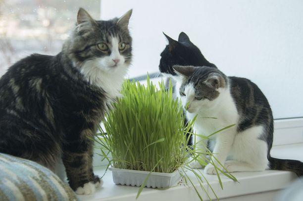 Kissojen touhuja voi seurata reaaliaikaisesti netissä.