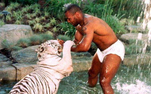 Järkyttävä välikohtaus: Mike Tyson kertoo, kuinka lemmikkitiikeri puri naisen käden irti – nyrkkeilijä maksoi jättikorvaukset