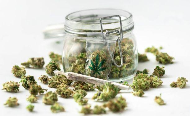 Uruguay aloittaa marihuanan myymisen apteekeissa heinäkuun alussa.