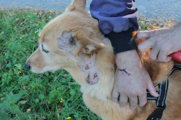 Lasse Lidströmin käteen tuli syvä haava ja Lira-koira sai puremia kaulaan, poskeen ja tassuun.