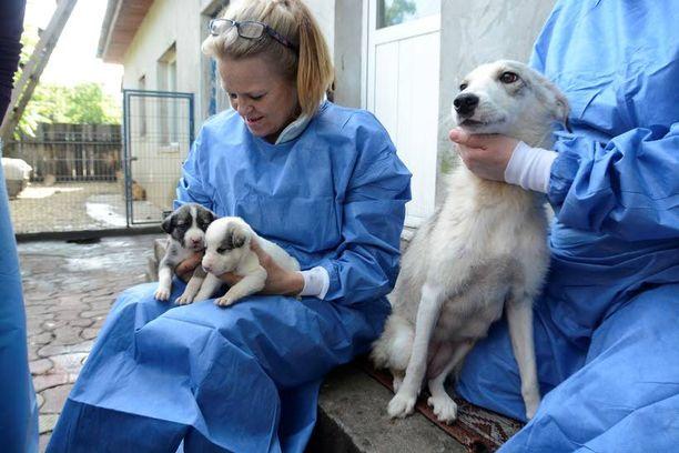 Lempeä narttu löytyi hautausmaalta pentujensa kanssa. Koirat Save the Dogsin tarhalle huolehtinut pappi käy yhä katsomassa, mitä pentueelle ja emälle kuuluu.