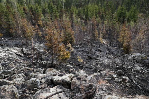 Maastopaloista voi koitua suuriakin tuhoja. Kangasaalan ja Lempäälän maastopalot veivät paljon metsää vuonna 2017.