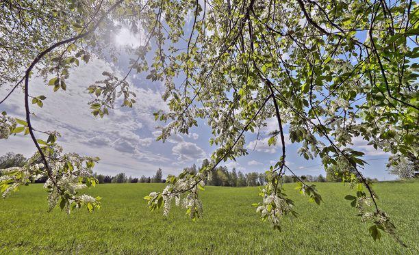 Suomalaisia hellitään tänään poutaisella säällä, kertoo Ilmatieteen laitos.