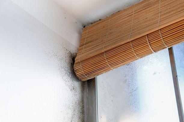 Erään lukijan ikkunankarmeissa oli hometta, johon isännöitsijä suhtautui tyynesti. Myöhemmin talossa todettiin mittava home-ongelma. Kuvituskuva.