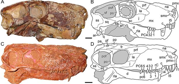 Fossiilit löydettiin Venäjältä Novgorodin koillispuolelta.