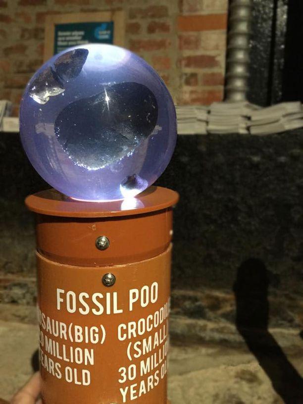 Näytillä on myös fossiilisia ulosteita eli koproliittejä.