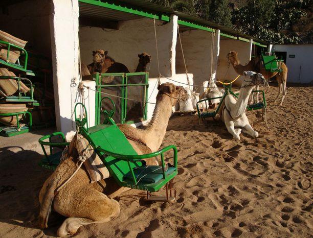 Fatagan kamelisafari