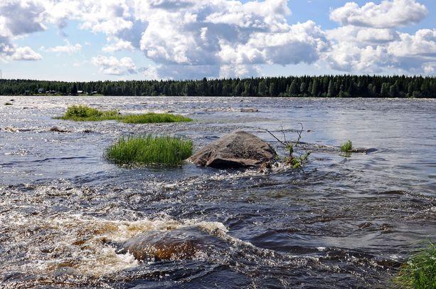 Tornionjoki virtaa osittain Suomen ja Ruotsin rajalla. Joessa on havaittu haavaisia ja harhailevia lohia. Kuvituskuva.